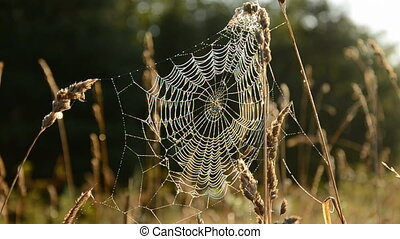 autumn spider-web in morning light