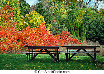 Autumn Splendor - Vacant picnic tables in a park.