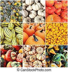 Autumn squash collage