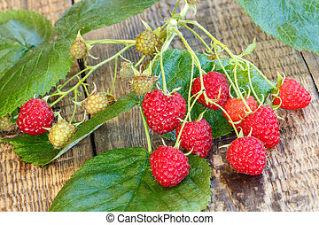 Autumn still life with branch of raspberries and green leaves