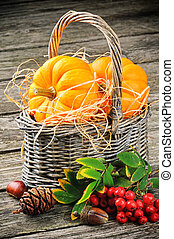 Autumn still-life with fresh pumpkins in basket