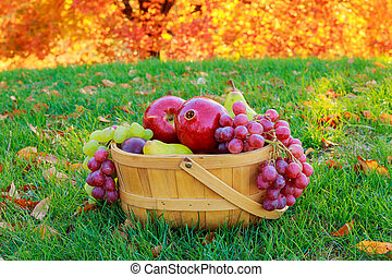 Autumn still life with fruits in a wicker basket and apples pears grapes