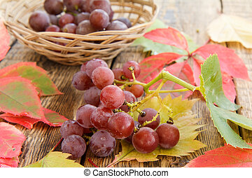 Autumn still life with grapes and wicker basket, green, yellow and red leaves
