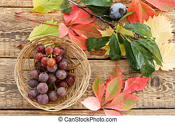 Autumn still life with plum on branch, grapes in wicker basket and leaves