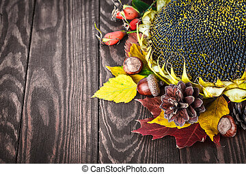 Autumn still life with sunflower pinecone dry