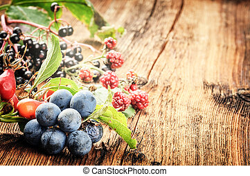 Autumn still life with wild forest berries. Copy space