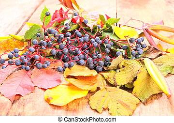 Autumn still-life with wild grape, leaves and more