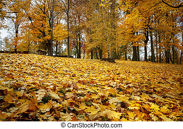 Autumn still life with yellow maple leaves