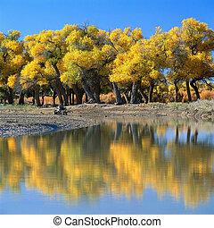 Autumn - Jiuzhaigou Valley Scenic and Historic Interest...