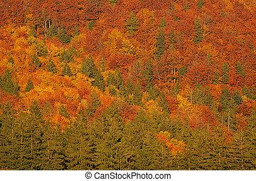 Autumn - beautiful autumn mood