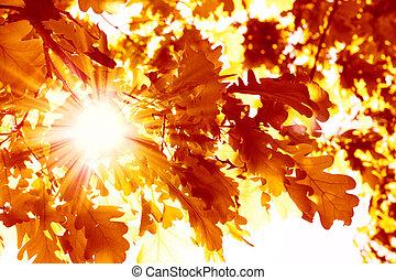 Autumn - Sun beams and autumn leaves