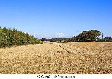 autumn straw stubble field