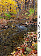 a tranquil stream meanders through the woodland. a forest preserve near chicago, cook county illinois awakens in autumn colors carrying fallen leaves downstream.