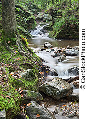autumn stream or small river with small rapid and fallen...