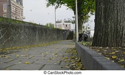 Autumn street in Amsterdam, yellow leaves, close up