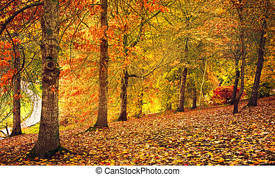 Autumn Stroll - Beautiful Autumn Colours in South Australia