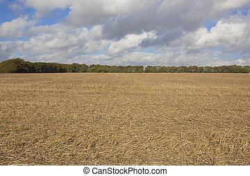 autumn stubble field