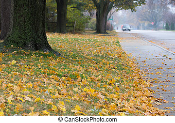 Autumn suburban street