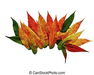 Autumn Sumac Leaves