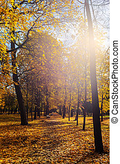 autumn sun in the park