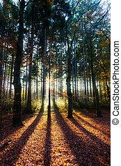 Autumn sun shadows