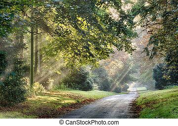 Autumn sunlight rays through the misty trees - Autumn...
