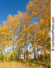 autumn sunny landscape