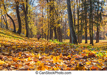 Autumn sunny landscape with a man in the park.