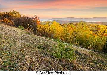 autumn sunrise in mountains. weathered grass and trees in...