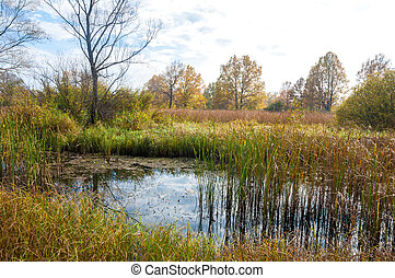 Autumn swamp. swamp landscape, bog forest with standing water. Autumn landscape