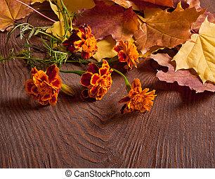 Autumn Tagetes flowers