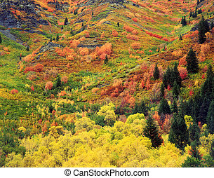 Autumn Tapestry#1 - Colorful trees and bushes on a hillside ...
