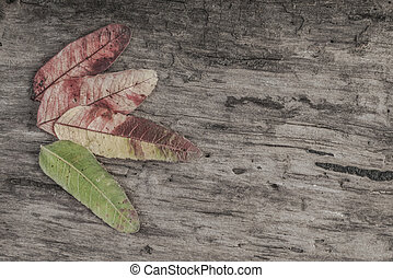 autumn template with leaves on wooden background