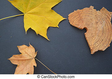Autumn texture of yellow maple leaves on a black background