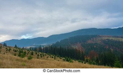 Autumn. The Mountain Forest