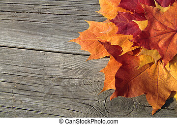 Autumn theme - Rustic autumn theme as a background with...