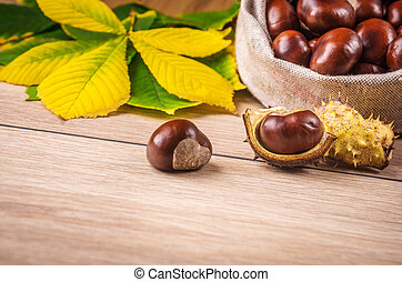 Autumn theme with a horse chestnut leaves.