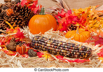 Autumn theme with corn - An Autumn holiday theme with...