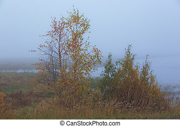 Autumn thick fog over a forest swamp