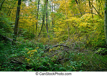 autumn thicket with fallen trees
