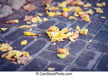 Autumn tile walkway with wet yellow leaves