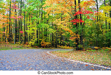 Colorful trees by the road in Michigan during autumn time