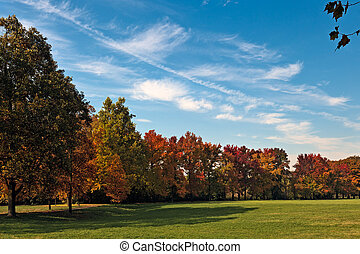 Autumn tints in Parco di Monza Italy
