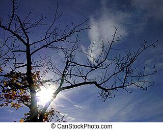 autumn top tree & sun & blue skyautumn top tree & sun & blue sky