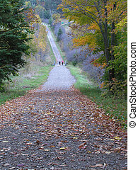 Hiking trail covered in coloured leaves in the fall.