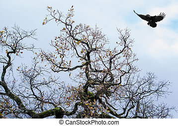 Autumn tree against cloudy sky with flying crow