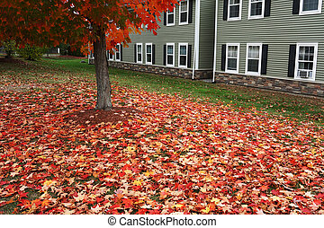 autumn tree and fallen leaves