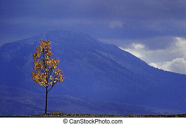 Autumn Tree and Mountains