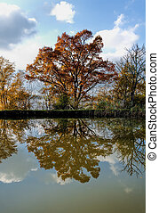 autumn tree and reflection
