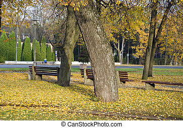autumn tree and wooden fence in park